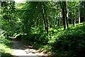 SX0570 : The Camel Trail Through Lower Helland Wood by Tony Atkin