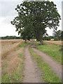 SJ4467 : Farm Track south of Guilden Sutton by David Quinn