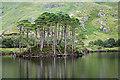 NM7882 : Island in Loch Eilt : Week 31