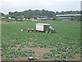 Dist:0.6km<br/>As seen from a byway from the B2173 Maidstone Road towards Birchwood Road.