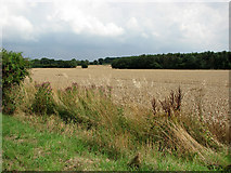 TG1301 : Fields south of Ketteringham Road by Evelyn Simak