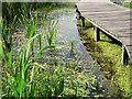ST1769 : Boardwalk reflections - Cosmeston Lakes : Week 33