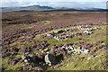 NN7295 : Lynmore ruins : Week 35