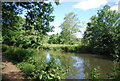 SU9948 : River Wey from Wey South Path by N Chadwick