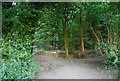 TQ0148 : The North Downs Way / Pilgrims' Way, Chantry Wood by Nigel Chadwick