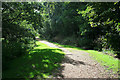 SZ0696 : Path in the Millhams Mead Nature Reserve by David Lally
