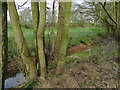 SO8188 : Philley Brook near Lutley, Staffordshire by Roger  Kidd