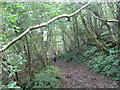 ST5257 : Footpath downhill through Ubley Wood by Dr Duncan Pepper