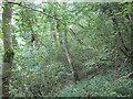 ST5257 : A steeply wooded hillside on the North Face of Ubley Down by Dr Duncan Pepper