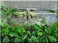 SU2895 : Benchmark on the Catholic Hall, Malborough Street by Roger Templeman