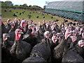 SU8685 : Kings Coppice Farm : Week 42