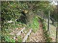TR1134 : Bench in Lympne Millennium Wood by David Anstiss
