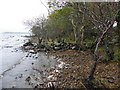 G8854 : Lough shore at Rusheen Point by Kenneth  Allen