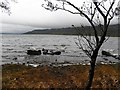 G8754 : Lough shore at Inishtemple Island by Kenneth  Allen