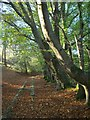 SX7878 : Templer Way in Yarner Wood by Derek Harper