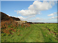 TM5383 : Observation Post with a slit embrasure at Benacre by Adrian S Pye