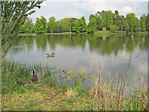 ST9770 : Bowood Lake - 1 by Trevor Rickard