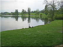 ST9770 : Bowood Lake - 3 by Trevor Rickard