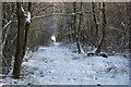 TL3453 : Eversden Wood by Spike Jackson