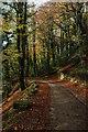 ST8397 : Track in Horsley Wood : Week 45