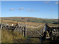 NY8437 : End of lane on moor above Ireshope : Week 45