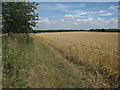 TL6955 : Wheat field off Bradley Road by Hugh Venables