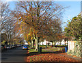 TL4657 : Davy Road: autumn leaves by John Sutton