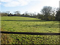 ST5858 : Grazing land on Burledge Common by Dr Duncan Pepper