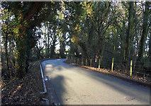 SJ3176 : Wooded Lane by J Scott