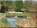 ST5959 : Duckpond with duckhouse at Stowey Manor by Dr Duncan Pepper