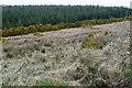 R2363 : Forestry at Burren by Graham Horn