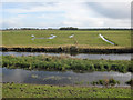 TL4786 : Ouse Washes by Hugh Venables