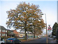 SP2979 : Oaks, Alderminster Road by E Gammie