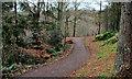 J3369 : Belvoir forest, Belfast (9) by Albert Bridge