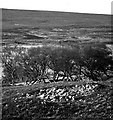 NC8955 : Remains of hut circles by Dalhalvaig, Strath Halladale by Evelyn Simak
