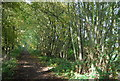 TQ5136 : Coppiced trees by the Forest Way by N Chadwick