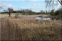 SO8844 : Croome River prior to restoration by Philip Halling