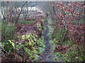 SJ8860 : Footpath off Congleton Edge by Stephen Craven