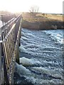 SK1904 : Weir, River Tame by Rob Farrow