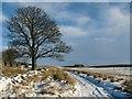 NS8076 : Snowy Track to Lochgreen at Righead Farm : Week 2