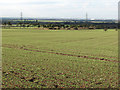 TL5754 : View from Old Cambridge Road by John Sutton