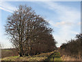 TL5152 : Beeches lining the Roman Road by John Sutton
