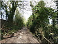 TQ1809 : Bridleway 3171 forms this section of the South Downs Way by Dave Spicer