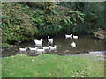 SX1090 : Ducks in Jordan Valley, Boscastle by Sally
