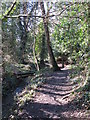TQ4164 : Footpath by the River Ravensbourne in the south of Padmall Wood by Mike Quinn