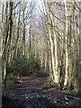 TQ4164 : Footpath in Padmall Wood (6) by Mike Quinn