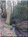TQ4166 : The River Ravensbourne in the north of Barnet Wood by Mike Quinn