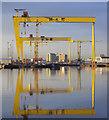 J3575 : The most famous cranes in Belfast : Week 7 winner