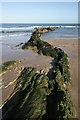 NT4985 : A rock formation at Weaklaw Rocks in East Lothian : Week 9