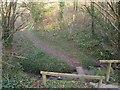 SX1651 : Path across West Coombe by Derek Harper